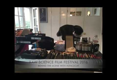 #SPACECAT AT #RSFF2016